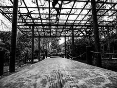 Shashin - DSCN2962 (Mathieu Perron) Tags: life city bridge people bw white black monochrome japan nikon kyoto noir perron daily nb journey   mp blanc japon personne ville gens vie mathieu   sjour    quotidienne  ryanji     p520  zheld