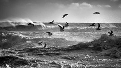 After The Storm - Seagulls at Youghal Beach