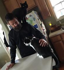 "Joey's daily ""Welcome Home"" (ShanMcG213) Tags: cats pets ava cat blackcat joey alabama ilovemycat cina catandowner blackandwhitecat huntsvilleal whiteandblackcat joeybutler catonshoulders"
