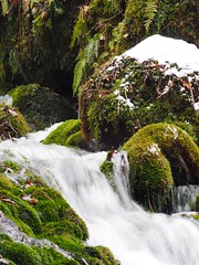 green and stream (murozo) Tags: winter snow water japan waterfall moss stream 日本 雪 冬 akita 秋田 水 滝 苔 nikaho underflow にかほ mototaki 元滝伏流水 fukuryusui