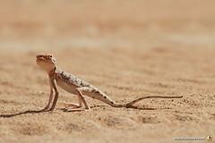 3-Oman-Desert-Marathon-Day-6_0068