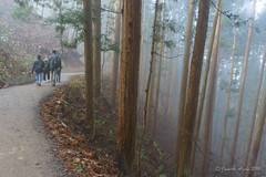 Jigokudani Monkey Park forest - like a painting (NettyA) Tags: travel trees winter people mist japan misty fog forest walking landscape asia track mood path trail pines atmospheric conifers naganoprefecture 2015 yudanaka yamanouchi jigokudanimonkeypark