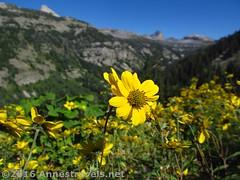 Wildflowers along the Stairway to Heaven 2 (Anne's Travels 4) Tags: canyon wildflowers wyoming wilderness tetons stairwaytoheaven grandtetonnationalpark jedediahsmithwilderness
