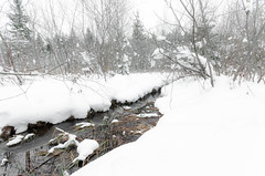 Winter wonderland (hjuengst) Tags: schnee trees winter snow reflection creek bayern bavaria january bach bume spiegelung winterbeauty reflektionen kirchsee weis nikond7000