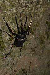 Bichito (Dr_Zero) Tags: parque patagonia nacional insecto