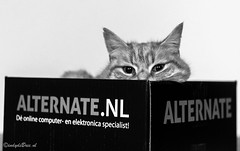 Project 3x50, week 04 (cindydebree.nl) Tags: pet animal cat canon fun 50mm kat funny box lol plasticfantastic katze huisdier dier kater catface grappig catinabox doos fotoproject niftyfifty 3x50 50mm118ii petphotoshoot canonnl canoneos100d canon100d huisdierenfotografie 3x50project vegeterian6