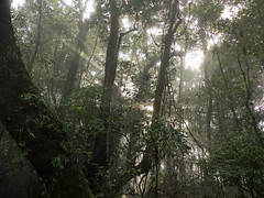 Forest Rays (brentflynn76) Tags: trees light sun mist green nature fog forest rainforest australia rays springbrook