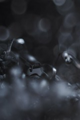 Paille de fer (Le mateur) Tags: steelwool paglietta pailledefer