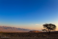 The Lonely Tree (xnir) Tags: landscape israel nir xnir nirbenyosef