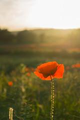 DSC04566 (wheelsy1) Tags: walking derbyshire poppy chesterfield sheepbridge poppyfield unstone richardwiles