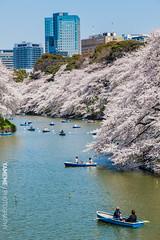 Chidorigafuchi / Tokyo, Japan (yameme) Tags: travel flowers nature japan canon eos tokyo  sakura cherryblossoms     chidorigafuchi   24105mmlis 5dmarkii 5d2