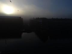 Gulls (screenpunk) Tags: sky seagulls amsterdam dawn gulls lucht morgen meeuwen wittenburg zonsopkomst oostenburg wittenburgervaart