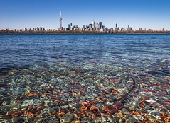 _DSC3003-Edit (doug.metcalfe1) Tags: winter toronto ontario nature skyline outdoor lakeontario 2016 tommythompsonpark