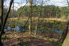 25.3.16 Delamere Forest 24 (donald judge) Tags: trees water forest countryside cheshire mere delamere