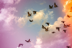 yfuitanesprituquemehicepjaroS (Gabriela Rosell grfica-foto-mente) Tags: sky colour cute me beauty birds animal animals clouds self freedom pretty natural being yo free aves colores pjaros cielo nubes animales colourful belleza lightness