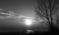 The photographer is waiting for the sunset (gerhard.haindl) Tags: sunset sky blackandwhite bw lake blur tree nature fog landscape geotagged noiretblanc outdoor nopeople shore landschaft baum schwarzweis geo:lat=4781891817 geo:lon=1679572998 xp107735v2