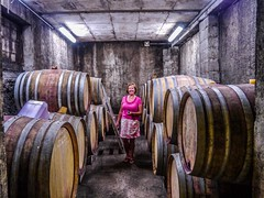 "The Cellar at the French Vineyard • <a style=""font-size:0.8em;"" href=""http://www.flickr.com/photos/91306238@N04/25594246295/"" target=""_blank"">View on Flickr</a>"