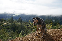 Mt. Tam Here I Am (4) (Planet Q) Tags: california mttam marincounty mounttamalpais
