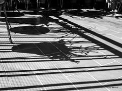 the endless cycle of nature... spring (dib, l'home dibuixat) Tags: shadow bw monochrome blackwhite spring outdoor monochromatic highlights infinite blancinegre flickrfriday olympusdigitalcamera lhomedibuixat zuiko17mmf18 olympusomd5mii theendlesscycleofnature