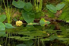 A Little Pond (australian_beauty) Tags: reflection green nature beautiful canon reflections wonderful amazing still pond peace greenisbeautiful awesome peaceful calm ponds lillypads ilovegreen beautifulpond canonaustralia