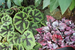 IMG_2458 (Mercar) Tags: canada garden botanical montreal jardin greenhouse botanic botaanikaaed qubeck