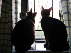 Bill & E (Steve only) Tags: cats bill 5 cellphone nexus e