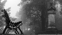 Alone in the Park (pelzwanze.) Tags: park bw fog nebel sicilia erice