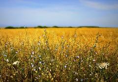 Spring (fiammetta53) Tags: field spring wildflowers fiammetta53 scenicsnotjustlandscapes