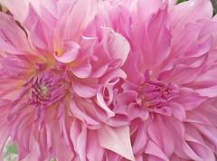 Lo que de raz se aprende ... ( Montse;-))) Tags: flores para pap tqm cumplepap