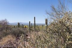 IMG_2923.jpg (ashleyrm) Tags: travel arizona museum sonora desert tucson tucsonarizona