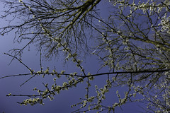 Spring is coming (My Photo Vision) Tags: nature spring blossom natur natuur rx100 sonydscrx100