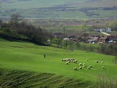Hdate (Gherla) (Bogdan Pop 7) Tags: rural europe village romania sat transylvania transilvania roumanie 2016 erdly erdely falu ardeal romnia hdate hesdt szamoshesdt