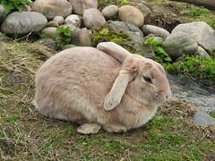 I think i saw a bunny rabbit (SJW_Pics) Tags: wild brown rabbit bunny green nature water animal animals rocks stream day natural stones farm ripple fat tide sunny ears tired farms lonely current rabit nofilter sjw sjwpics samwilsonpics
