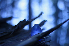 Skyborn Dragonegg (Meastrology) Tags: birthday wood blue light sunset sky sun sunlight beauty sunshine sunrise lenseflare landscape licht droplets drops spring glow sonnenuntergang dragon little bokeh small birth dream dragons drop dreaming divine dreams droplet glowing dreamy lonely blau landschaft sonne sonnenaufgang divinity beautifull lense schnheit drache drachen leuchten schn strahlen glhen drausen dragonegg dragoneggs drachenei skyborn