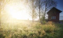 Sunburst (Matthias Lehnecke   www.ml-foto.se) Tags: morning trees sun house golden sweden side country hut dew sverige rays straws vrmland vnsberg