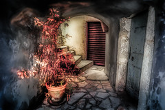 Passage with Plant (Bernd Thaller) Tags: door old stairs vivid indoor saturation archway hr plantpot kroatien falsecolors strongcolors moenice primorskogoranskaupanija