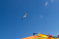 TH20150514A603438 (fotografie-heinrich) Tags: strand himmel mwe ostsee vogel zingst