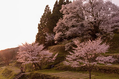 31Butsuryuji Temple (anglo10) Tags: sunset japan cherry temple