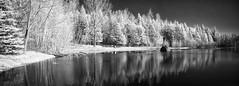 Premires chaleurs/First warm days/Frsta varma dagarna (Elf-8) Tags: trees blackandwhite bw sun lake ir deep