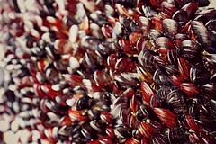 frites (patoche 38) Tags: sea beach frites playa shellfish mussel plage moules mollusc mejillones mollusques