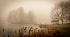 Abbott  Lake (R Goff) Tags: lake fog island virginia otterlake peaksofotter