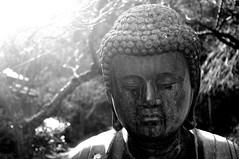 Buddha (runslikethewind83) Tags: blackandwhite monochrome face statue japan pentax buddha kamakura religion kanagawa 2016