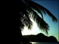 Soñando palmas. (Cesar photos) Tags: ocean summer art love beach azul paint heaven coconut amor venezuela paz colores palm tropical tropic palma cor palmera belleza ocre cocotero latinoamérica chaguaramos