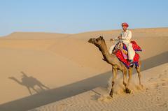 Rajasthani Camel (naomipics) Tags: champion matchpointwinner t489