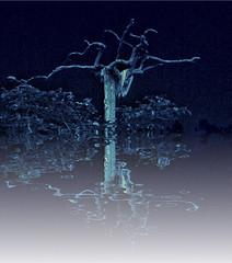 tree (marjonveerkamp) Tags: tree mirror fantasy