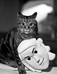 je hais les enfants (jefdgeo) Tags: animal chat masque jeux