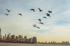 geese (Visual Thinking (by Terry McKenna)) Tags: park liberty state nj