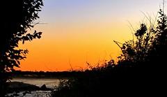 Mimi's View (Melanie Bradley) Tags: ocean sunset seascape tree beach nature silhouette landscape horizon shoreline textures artsy rhodeisland coastline marthasvineyard goldenhour narragansettbeach oceanveiw