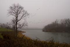 Blackwell Lake, Winfield, IL DSC05704 (nianci pan) Tags: morning trees lake flower water grass birds fog river landscape illinois sony foggy dupage pan blackwellforestpreserve winfield dupagecounty chicagosuburb sonyalphadslr nianci sonyphotographing