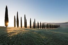 Hiding the Sun (MrBlackSun) Tags: italy sunrise nikon tuscany cypress valdorcia cypresses orcia d810